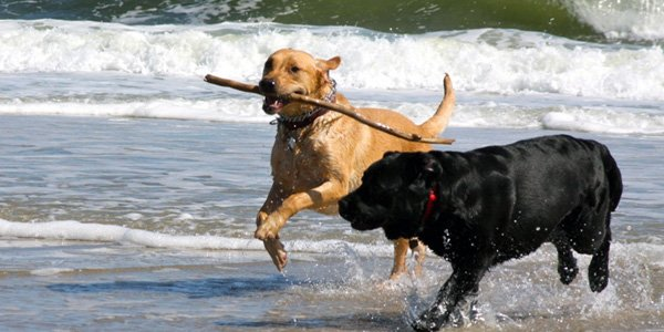 Pet Friendly Policies York Harbor Inn Maine Rooms Dog Friendy Hotel